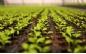 Professional horticulture - M-plastics